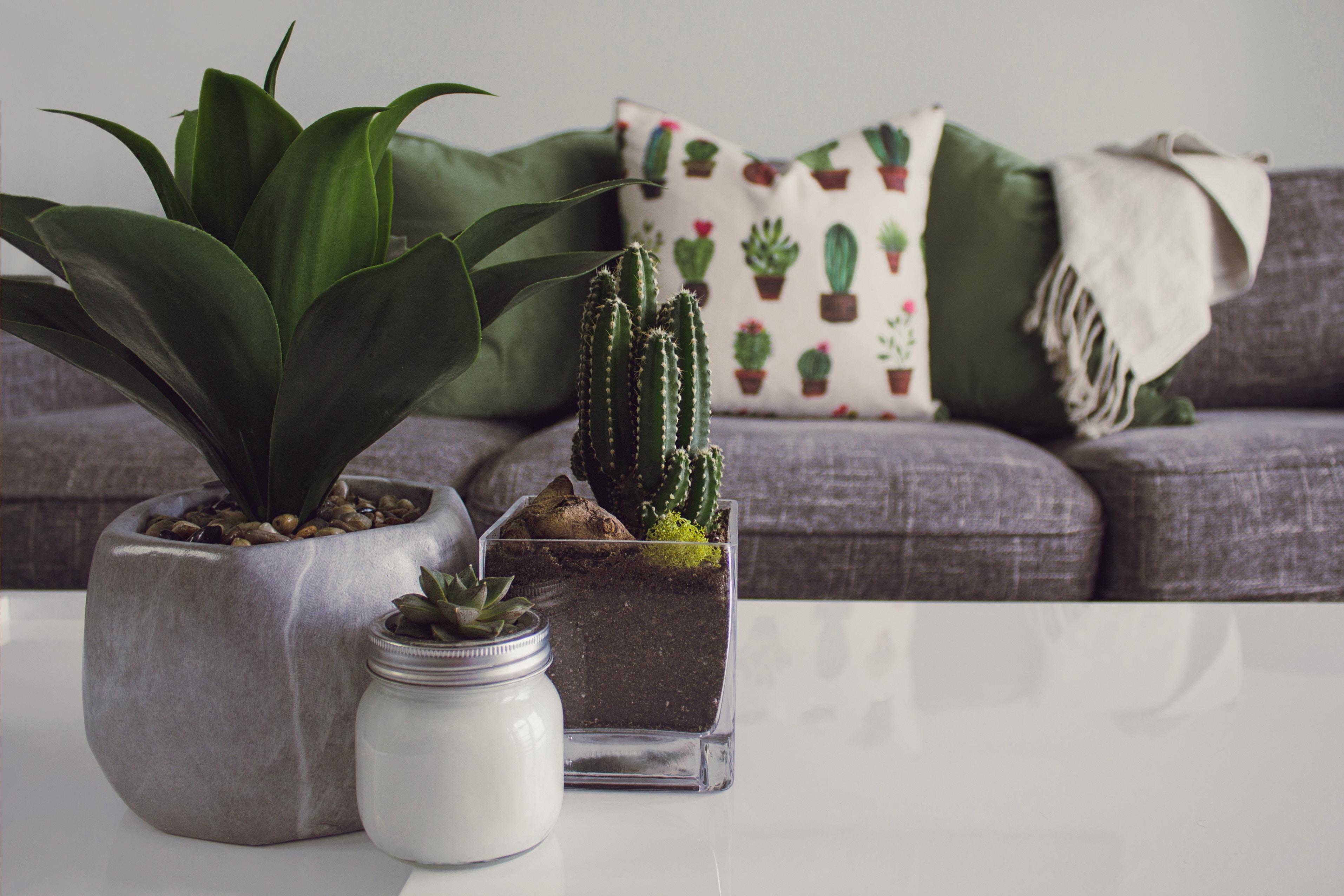 plante d'intérieur decoration