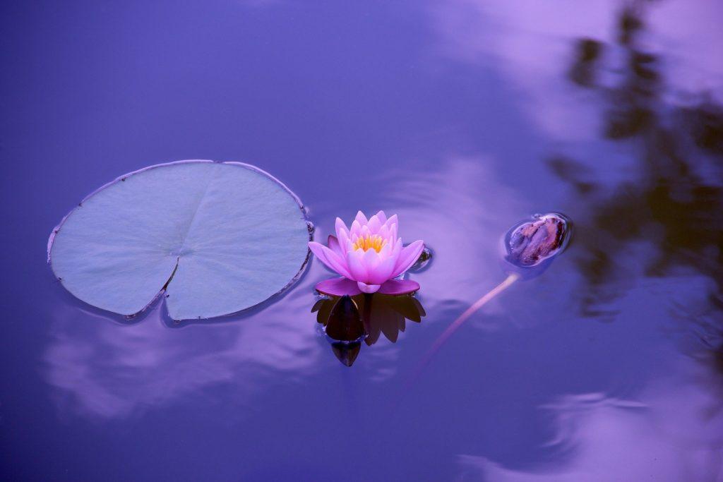 zen style Danshari lotus