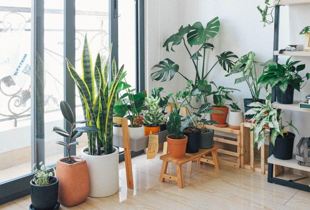Donnez de la vie à votre maison avec un jardin intérieur