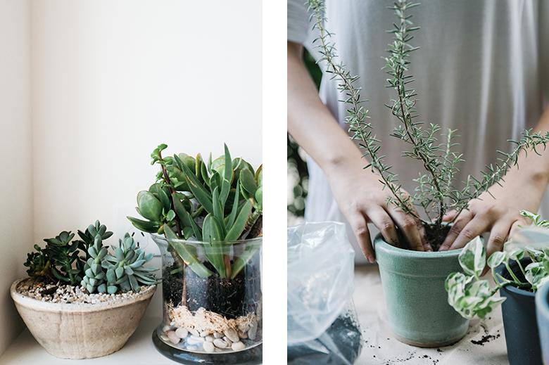 soin des plantes, plantes grasses