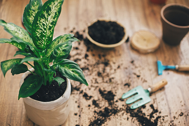 matériel botanique